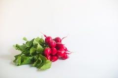 Frischer roter Rettich auf weißem Hintergrund Stockbilder