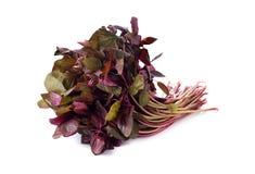 Frischer roter Spinat oder roter Amarant auf Weiß lizenzfreie stockbilder