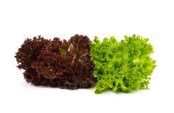Frischer roter und grüner Kopfsalat Lizenzfreie Stockfotos