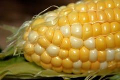 Frischer süßer Mais Lizenzfreie Stockfotos