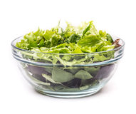 Frischer Salat mit Arugula Stockfotografie