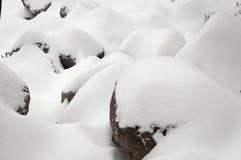 Frischer Schnee Lizenzfreie Stockfotografie