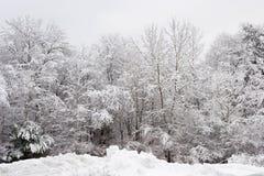 Frischer Schnee auf Bäumen Lizenzfreies Stockfoto