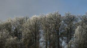 Frischer Schnee auf Bäumen des Waldes stockbilder