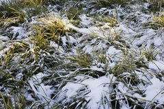 Frischer Schnee auf Gras Stockfotos