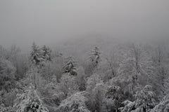 Frischer Schnee bedeckte Bäume auf der Seite eines Berges nach einem großen Schneesturm stockfotos