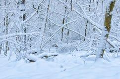 Frischer Schnee, der den Wald bedeckt lizenzfreies stockfoto