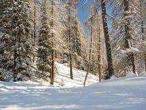 Frischer Schnee in einem Gebirgswald Lizenzfreie Stockfotos