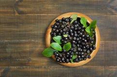Frischer schwarzer Chokeberry Stockfotos