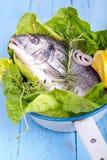 Frischer Seebrachsen mit Zitrone und grünem Salat Lizenzfreies Stockfoto