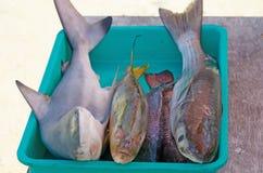 Frischer Seefisch ein Haifisch in einem Behälter im Verkauf lizenzfreie stockfotografie