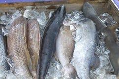 Frischer Seefisch ein Haifisch in einem Beh?lter im Verkauf stockbild