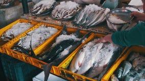 Frischer Seefisch im Eis auf dem Gegenmarkt stock footage