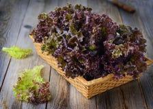 Frischer selbstgezogener purpurroter Kopfsalat im Korb auf Holztisch Lizenzfreies Stockbild