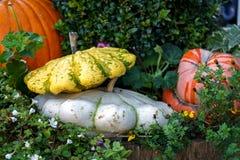 Frischer sortierter K?rbis und K?rbis in einem Herbstgarten unter Buchsbaum lizenzfreie stockfotos