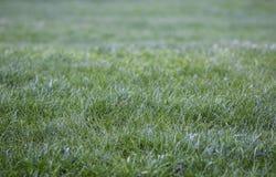 Frischer Tau auf schönem jungem grünem Gras stockfotografie