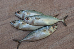 Frischer Thunfisch bereit zum Kochen Stockfotografie