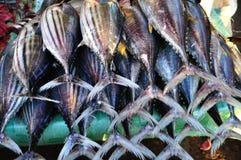 Frischer Thunfisch (Thunnus albacares) Lizenzfreies Stockfoto