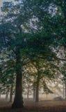 Frischer Wald stockbild