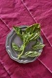 Frischer wohlriechender Basil Herb Picked von meinem organischen Herb Garden Oci Stockfoto