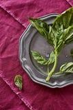 Frischer wohlriechender Basil Herb Picked von meinem organischen Herb Garden Oci Stockbild