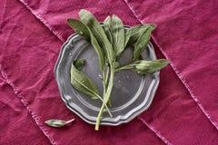 Frischer wohlriechender Sage Herb Picked von meinem organischen Herb Garden Salv lizenzfreie stockfotografie