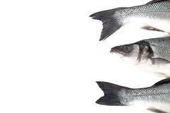 Frischer Wolfsbarsch drei auf einem hellen Hintergrund Kopf und zwei Endstücke Stockbild