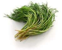 Frisches agretti, italienisches Gemüse stockbilder