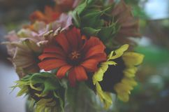 Frisches Bündel Blumen, vom organischen Hausgarten Chrysanthemen und Sonnenblumen im Vase Schöner Hauptblumengarten in Puerto R lizenzfreie stockfotografie