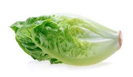 Frisches Baby Lattich (Kopfsalat) Lizenzfreies Stockbild
