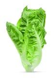Frisches Baby Lattich, Kopfsalat lokalisiert auf weißem Hintergrund Stockfotos