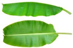 Frisches Bananen-Blatt getrennt Stockfotografie
