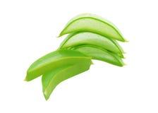 Frisches Blatt Aloeveras lizenzfreie stockfotos