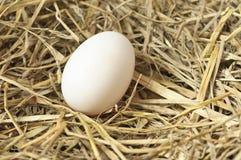 Frisches Ei in einem Nest des Heus Lizenzfreies Stockbild