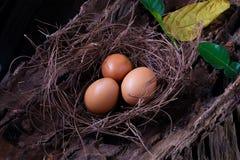 frisches Ei 3 im Netz Lizenzfreies Stockbild