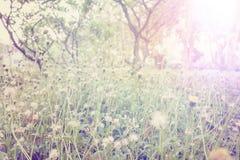 Frisches Feldgras gegen und Sonnenlicht Lizenzfreies Stockfoto