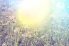 Frisches Feldgras gegen und Sonnenlicht Lizenzfreies Stockbild