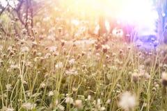 Frisches Feldgras gegen und Sonnenlicht Lizenzfreie Stockbilder