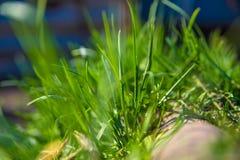 Frisches Frühlingsgras Lizenzfreie Stockbilder