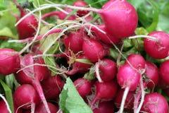 Frisches Garten-Gemüse stockfotos