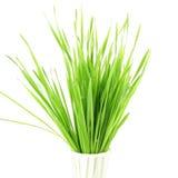 Frisches gekeimtes Weizengras mit Wasser fällt in weißen Hintergrund Lizenzfreies Stockfoto