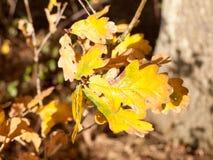 Frisches gelbes Herbstlaubbaumastlaub generisch lizenzfreie stockfotos