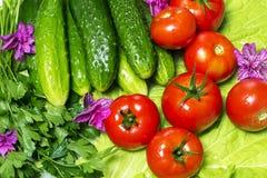 Frisches geschmackvolles Gemüse für das Kochen Lizenzfreie Stockbilder