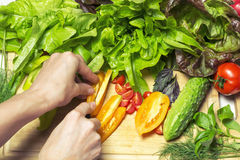Frisches geschmackvolles Gemüse für das Kochen Mit dem Vorhandensein menschlichen h Stockbild