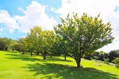 Frisches Grün gegen blauen Himmel mit Wolken Stockfoto