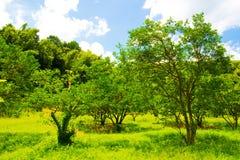 Frisches Grün gegen blauen Himmel mit Wolken Lizenzfreie Stockbilder