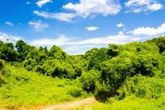 Frisches Grün gegen blauen Himmel mit Wolken Lizenzfreies Stockbild