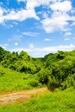 Frisches Grün gegen blauen Himmel mit Wolken Stockbild