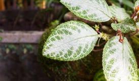 Frisches grünes Blatt, Anlage im Garten Stockfotos