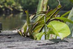 Frisches grünes Blatt auf verfallenem hölzernem Hintergrund Natürlicher Compo stockfotografie